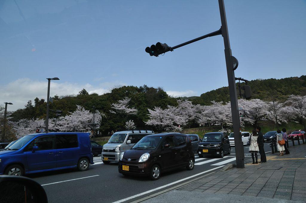 蹴上の桜と渋滞