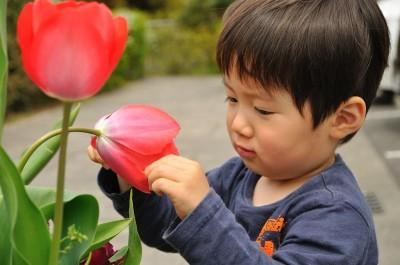 チューリップの花の中には何があるのかな?
